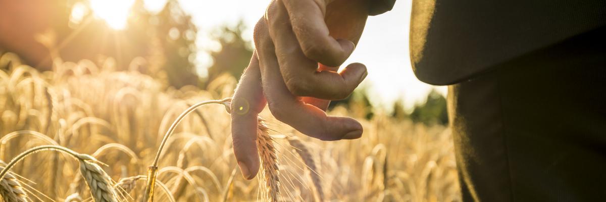 Man in suit walking through wheat field